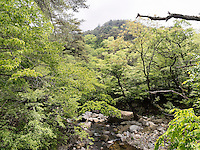 Bach beim buddhistischen Tempel Heinsa nahe Daegu, Provinz Gyeongsangnam-do, S&uuml;dkorea, Asien<br /> creek at temple heinsa near Daegu,  province Gyeongsangbuk-do, South Korea, Asia