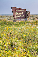 The Cimarron National Grassland in Western Kansas.