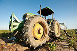 John Deere 6400 tractor in a field during radicchio harvest in California's San Joaquin Valley.