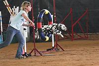 Dog Aglity Trials