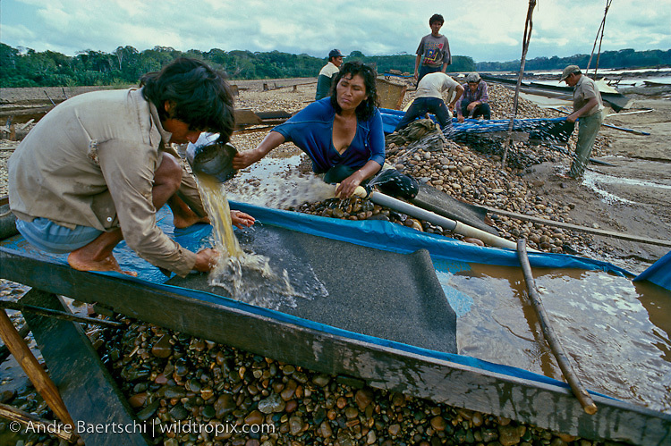 Gold miners using a sluice to separate the heavier gold particles from the lighter substrate. Lowland tropical rainforest along the Rio Tambopata, Tambopata National Reserve, Madre de Dios, Peru.