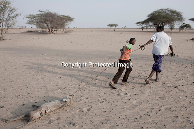 DILMANYALE, KENYA - JULY 4: A man and a boy pulls a warthog carcass in a barren area on July 4, 2011 in Dilmanyale, Kenya. Two successive poor rains, entrenched poverty and lack of investment in affected areas have pushed millions of people into a fight for survival in the Horn of Africa. This is the driest this area has been since sixty years. People in smaller town are usually fortunate to have water. In rural areas, most wells has dried up and some people was as much as eight kilometers to fetch water. Most of the livestock has perished and the remaining stock has often been taken far away for better conditions. Many has even crossed into neighboring Somalia for better pasture. (Photo by Per-Anders Pettersson)