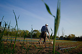 Long Island, Peconic<br /> New York<br /> May 20, 2013<br /> <br /> Sang Lee Farm, an organic farm in Long Island owned and run by farmer Fred Lee.