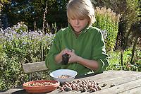 Kind, Junge knackt gesammelte Haselnüsse mit einem Nussknacker, macht aus Haselnüssen eine eigene Nuss-Schoko-Creme, (Nutella), Hasel, Ernte, reife Nüsse Haselnuß, Haselnuss, Früchte, Nuß, Nuss, Corylus avellana, Cob, Hazel, Coudrier, Noisetier commun