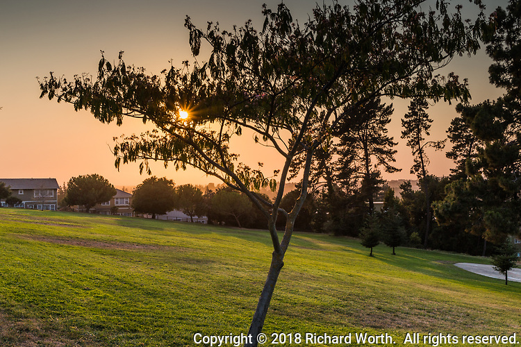 The sun creates a sunburst through a tree an hour and a half before sunset, as wild fire smoke paints the western sky orange.  All seen from the San Felipe Community Park looking west toward San Francisco Bay.