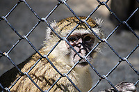 RIO DE JANEIRO, RJ - 08.03.2016: ZOO-RJ - O Jardim Zoológico do Rio de Janeiro foi reaberto parcialmente ao público na manhã desta terça-feira (8). O local estava fechado há quase três meses, desde o dia 14 de janeiro, por determinação do Ibama. Na última sexta-feira (4), porém, o superintendente do instituto, Zilto Bernardi Freitas, suspendeu parcialmente o embargo à visitação. (Foto: Beto Ohana/Brazil Photo Press)