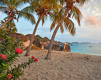 Virgin Gorda, British Virgin Islands, Caribbean <br /> Red flowering jungle geranium (Ixora coccinea) and palm trees lean towards the beach on Spring Bay at sunset, Spring Bay National Park