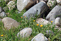Stock image of wild grass flowers and rocks near the Troodos mountain range in Cyprus.