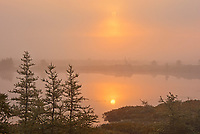 Fog at sunrise over wetland<br />