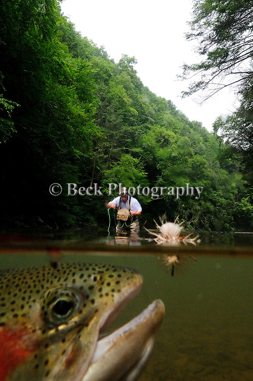 FLY FISHING IN FRESHWATER