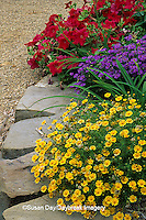 63821-03101 Alladin red petunia, Swan River Daisy, and Dahlberg Daisy    IL