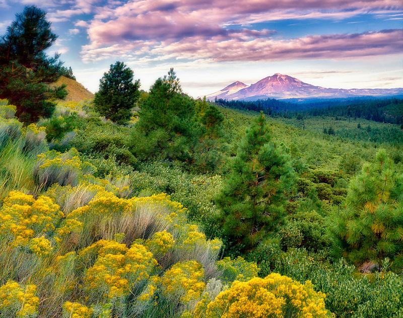 South Sister Mountain and rabbitbrush. Oregon