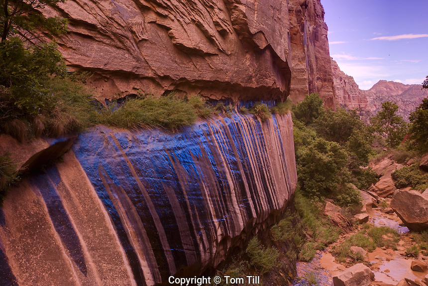 Seep wall .Canaan Mountain Wilderness Study Area, Utah.Lush greenery in Water Canyon.Springs flowing from canyon walls