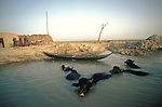 Marsh Arabs. Southern Iraq. Circa 1985. Marsh Arab family with Water Buffalo. . Haur al Mamar or Haur al-Hamar marsh collectively known now as Hammar marshes Irag 1984