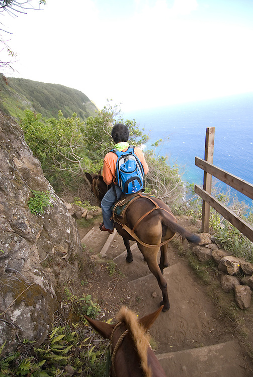 Hawaii: Molokai, the Mule Ride from the cliff tops down 1,600 feet to the leper colony at Kalaupapa. Model released..Photo himolo139-72183.Photo copyright Lee Foster, www.fostertravel.com, lee@fostertravel.com, 510-549-2202