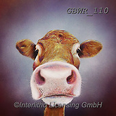 Simon, REALISTIC ANIMALS, REALISTISCHE TIERE, ANIMALES REALISTICOS, paintings+++++Card_AdamB_NoseyCow,GBWR110,#a#, EVERYDAY,cow
