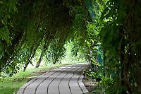 Path, in a summer garden, New Jersey