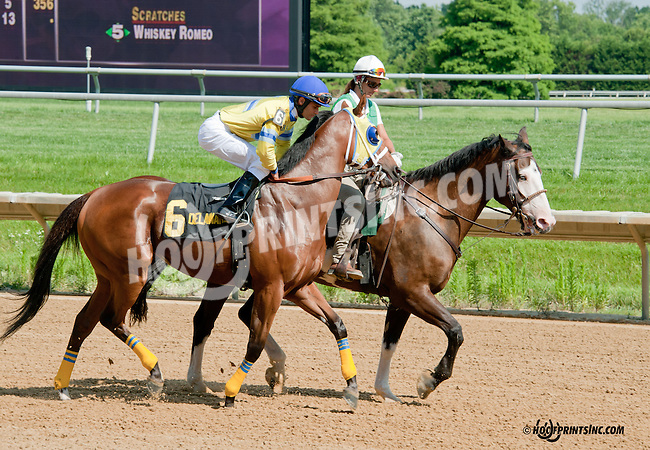 Silver Morgan before The Oh Say Stakes at Delaware Park on 6/29/13