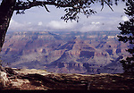 GRAND CANYON PANORAMA FRAMED BY TREE IN LATE AFTERNOON