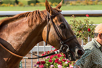 CYPRESS, CA. JULY 8: #5 Skye Diamonds  after winning the Great Lady M Stakes (Grade ll) on July 8, 2017 at Los Alamitos Race Course in Cypress, CA (Photo by Casey Phillips/Eclipse Sportswire/Getty Images)