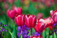 Garden, flowers, grow, mixed, flora, botanic, colorful, blooming, spring, garden, horticulture