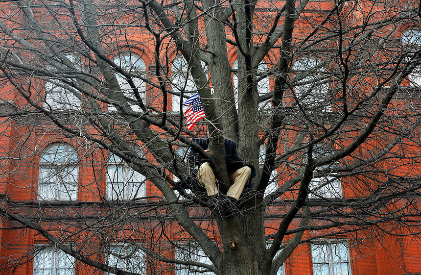 Man in a tree during the Obama inauguration.