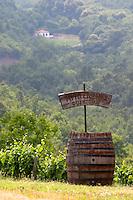 Vineyard. Stranza village near Naoussa. Macedonia, Greece.