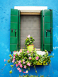 Blue wall with window and green shutters, flowers. The colorful village of Burano, Italy.