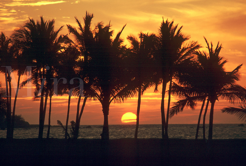 The sun sets into the horizon beyond the silhouettes of palm trees. Hawaii.