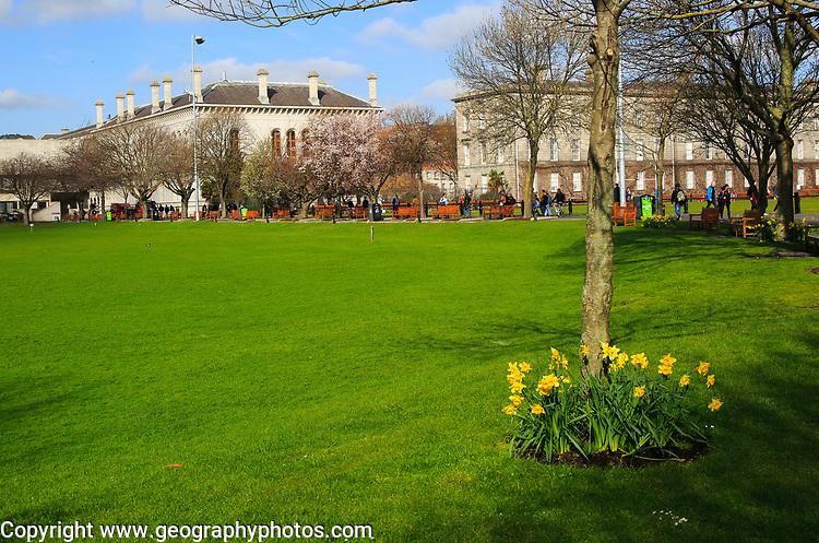 Daffodils spring flowers at Trinity College university grounds, Dublin, Ireland, Republic of Ireland