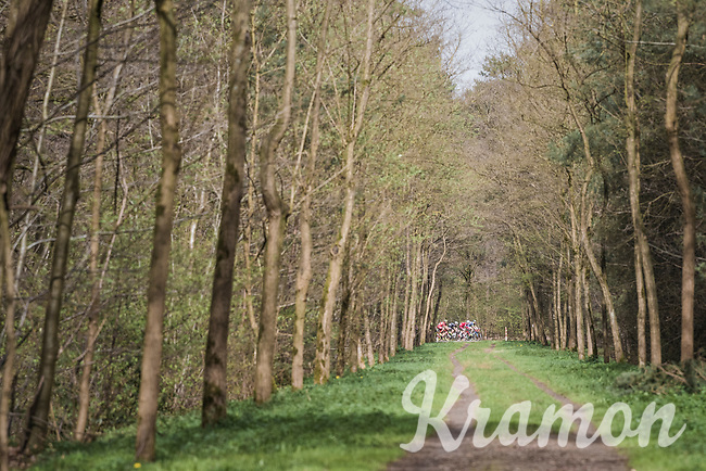 early breakaway group seen through the forest<br /> <br /> 105th Scheldeprijs 2017 (1.HC)<br /> 1 Day Race: Mol &rsaquo; Schoten (BEL/202km)
