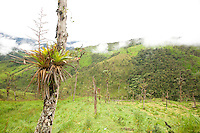 Reforestation; Tapichalaca Reserve;  Ecuador, Prov. Zamora-Chinchipe
