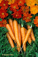 HS12-012c  Carrot - just harvested, Newburg variety with mini cosmos flowers
