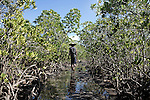In the mangrove of Amtsahampano lies the mangrove crab. An animal once eaten locally, but which has been hunted for 5 years to be exported to China, where it is a very popular meals of great restaurants. Chinese traders are thus installed in Ambanja to manage the export.