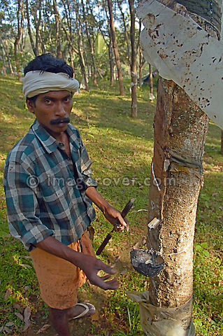 Indian man working on a gum-tree plantation between Kottayam and Periyar. Kerala, India. No releases available.