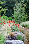 Poppies (papaver rhoeas) among the rocks surrounding the water feature and outdoor dining area