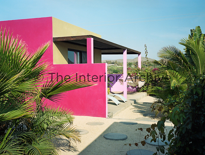 Palm trees planted in a gravel garden are silhouetted against walls painted a deep shocking pink