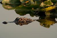 Everglades 2009