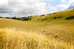 Ancient terraced fields known as strip lynchets cut into a chalk scarp slope at Bishopstone, Wiltshire, England