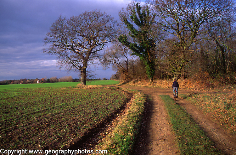 ARM499 Path field tree scenic view Butley Suffolk England