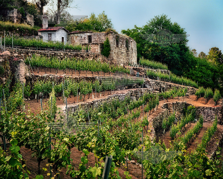 Emilio Rojo's vineyard in Orense.