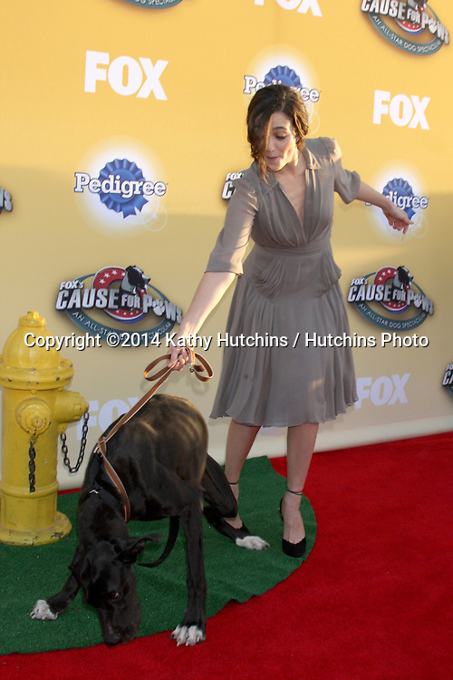 """LOS ANGELES - NOV 22:  Emmy Rossum at the FOX's """"Cause for Paws:  All-Star Dog Spectacular"""" at the Barker Hanger on November 22, 2014 in Santa Monica, CA"""