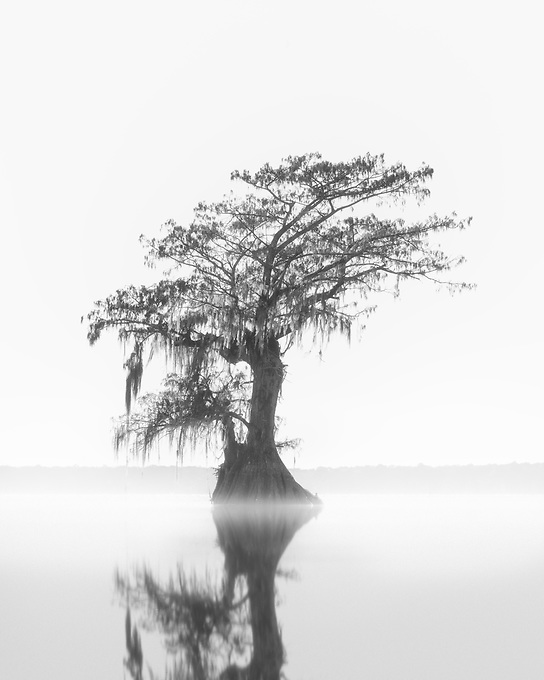 A lone cypress reflected on the misty water at sunset.