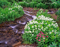 Small stream with wildflowers in Uncompahgre National Forest, Colorado.