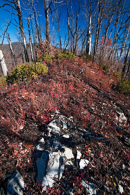 Years after the fire, the forest struggles to recover on Whitehouse Mountain, Rocky Fork Tract , Unicoi County