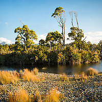Native coastal forest in Gillespies Lagoon, Westland Tai Poutini National Park, West Coast, UNESCO World Heritage, New Zealand, NZ