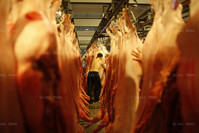 Buyers examine and select pig carcasses to purchase for the morning food markets at a wholesale center on the outskirts of Shanghai, China on 15 July 2011.   Inflation, especially the persistent rise of food prices, has been a major conversation topic for China's masses and concern for its leaders as inflation often lead to political instability throughout China's history. As by far the most important meat in the Chinese diet, pork and its rapidly rising price (56% increase from last year), is seen by many as the symbol of China's inflation.