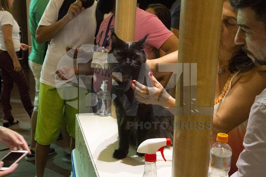 São Paulo,SP- 12.03.2017 - 175a Exposições Internacionais de Gatos de Raças no Clube Homs na Av Paulista neste Domingo,12 (Carlos Pessuto/Brazil Photo Press/Folha Press)