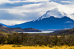 Magellanic deciduous forest and mountains, Torres del Paine National Park, Patagonia, Chile