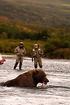 An angler and his guide look on as a grizzly bear devours his catch in Alaska.